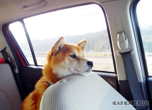 大切な愛犬とのドライブを楽しむためにも、カーエアコンのメンテナンスを